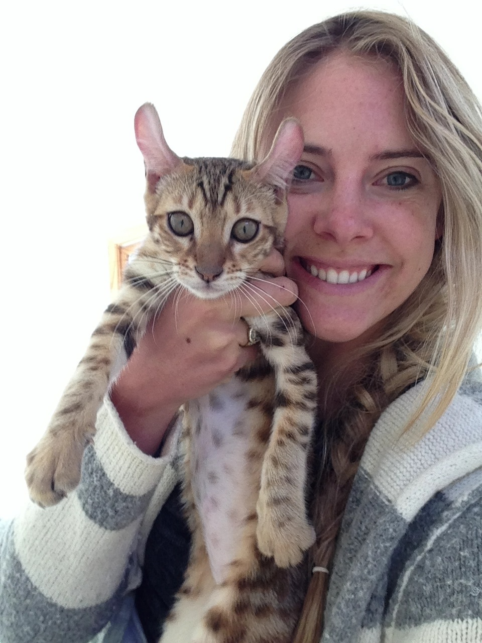 Ocelot Cats For Sale Canada